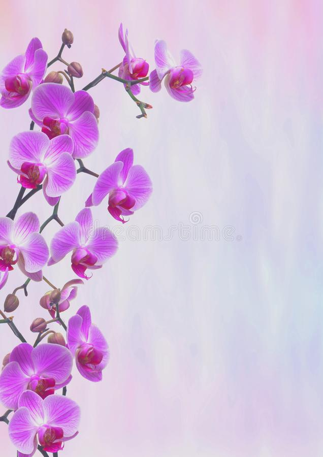 Violet Orchids Greeting card royalty free stock photo