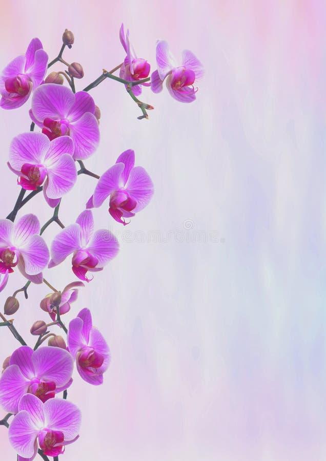 Violet Orchids Greeting-Karte lizenzfreies stockfoto