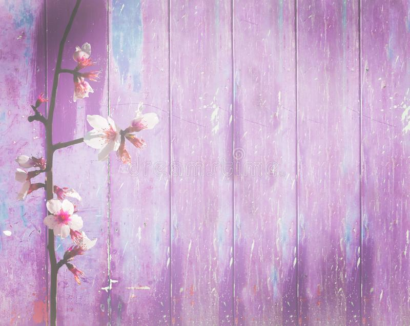 Violet pink wood background spring flowers shabby royalty free stock images