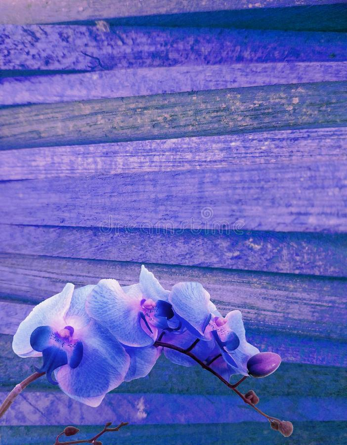 Violet purple wooden background or backdrop royalty free stock images
