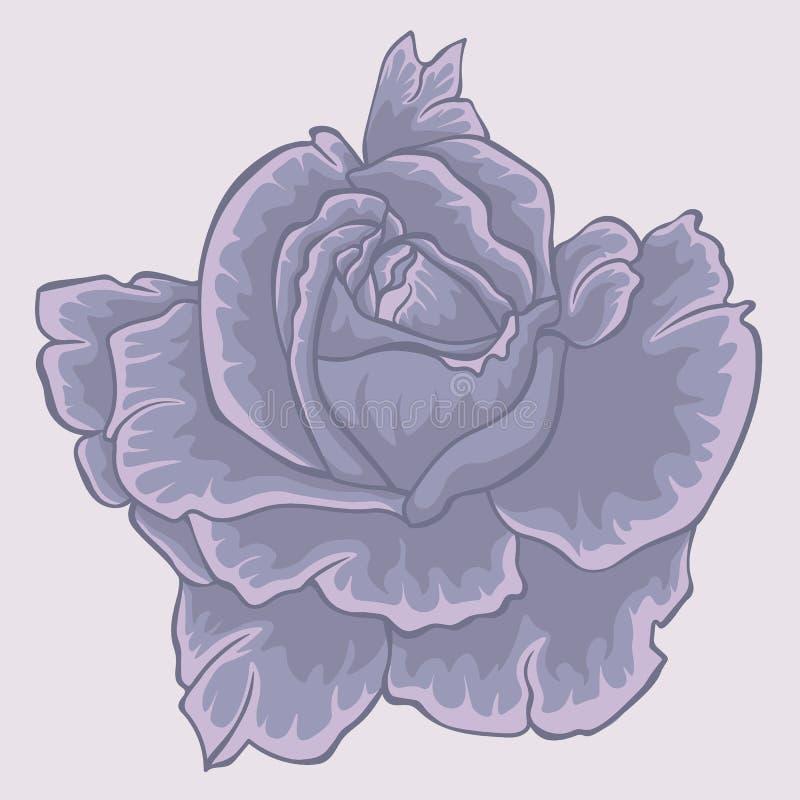 Violet rose. flower. Isolated violet rose vector illustration