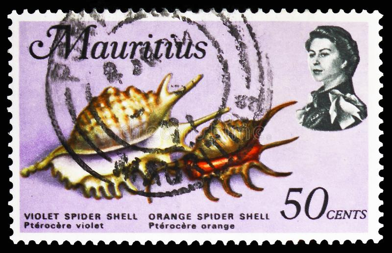 Violet Spider Shell, aranha alaranjada Shell, serie dos animais de mar, cerca de 1969 fotografia de stock