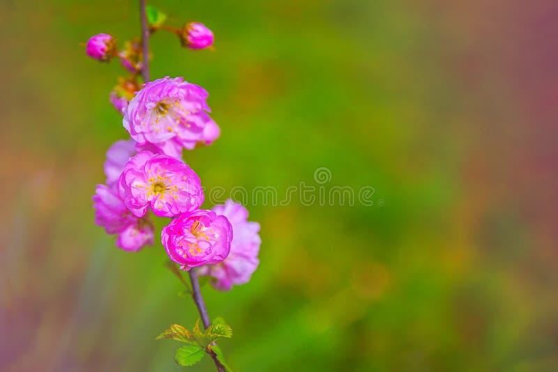 Violet Spring Flowers foto de stock