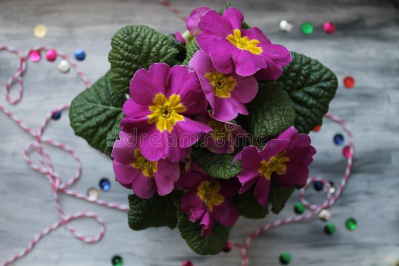 Violet Spring Flowers photographie stock libre de droits