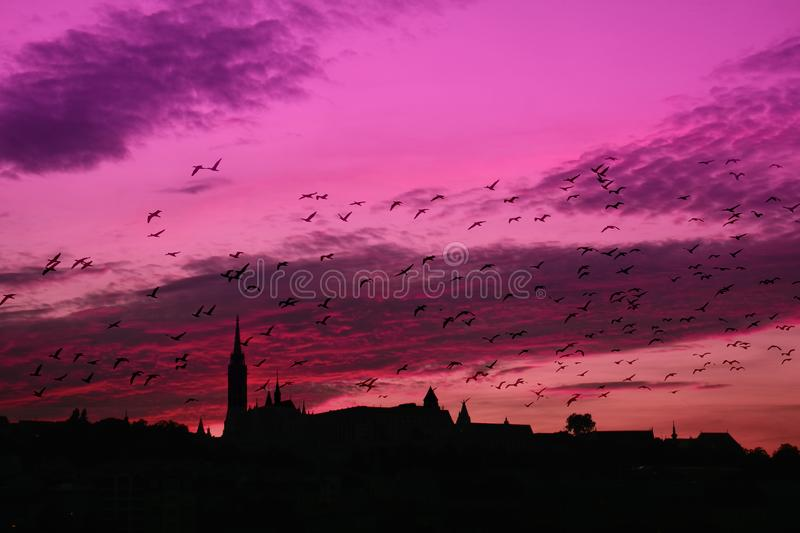 Violet sunset stock photography