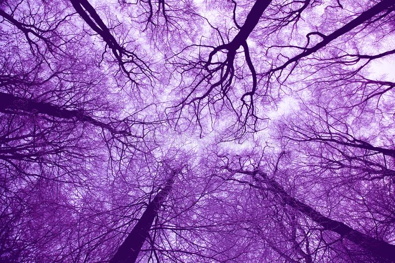 Violet Treetops stockfotos