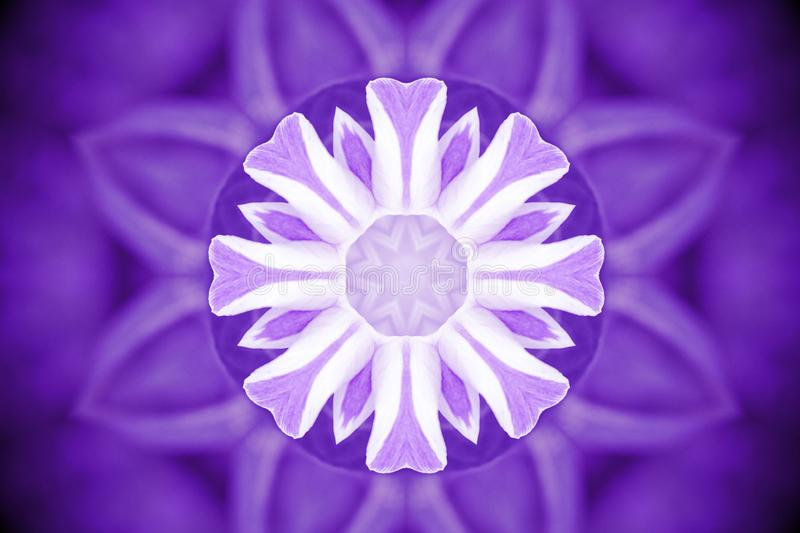 Violet wild flower petals with kaleidoscope effect, abstract col stock photo
