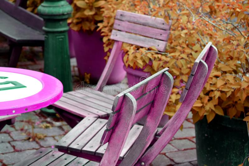 Violet wooden chairs with table in the garden with orange plants. Background royalty free illustration