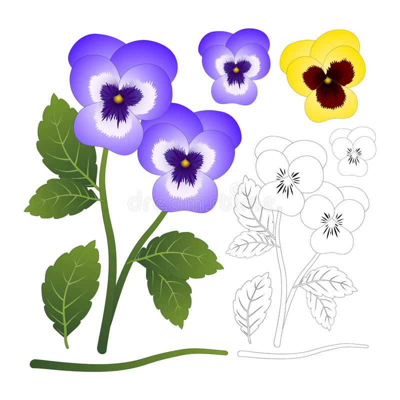 Violet and Yellow Viola Garden Pansy Flower with Outline isolated on White Background. Vector Illustration.  stock illustration