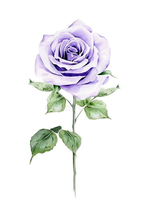 A violeta da aquarela aumentou ilustração stock