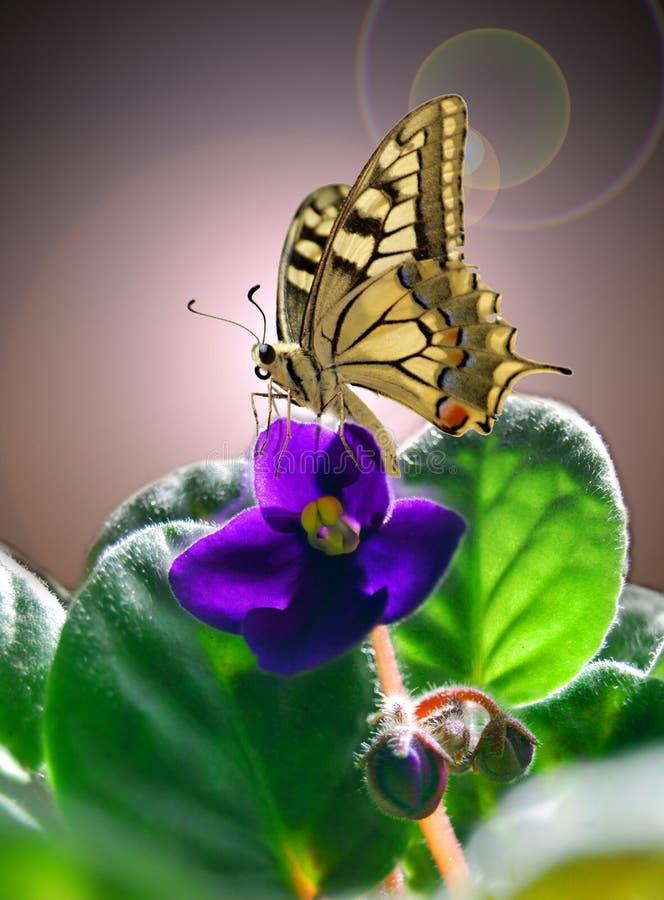 Violeta e borboleta imagem de stock