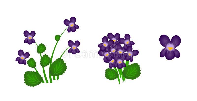 violetas ilustración del vector