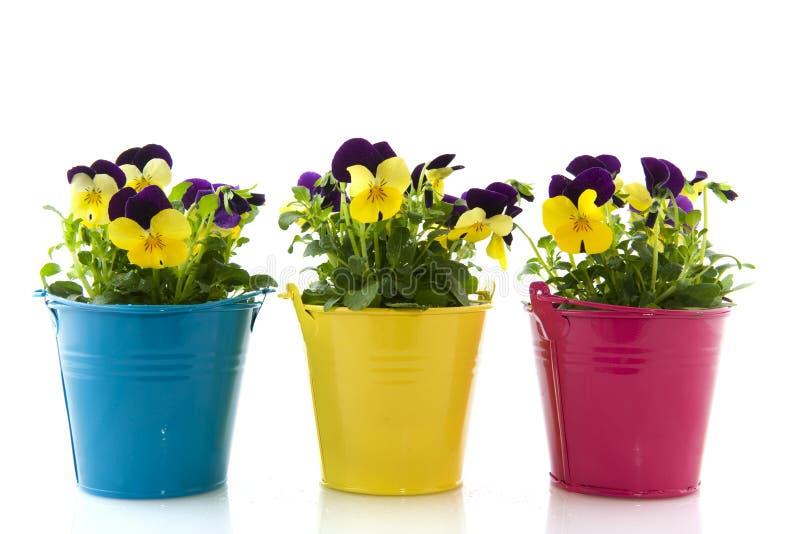 Violetas amarelas e roxas fotografia de stock royalty free