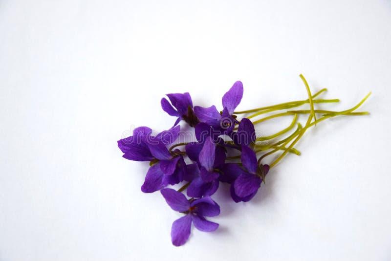 Violetas con el fondo deletreado imagen de archivo
