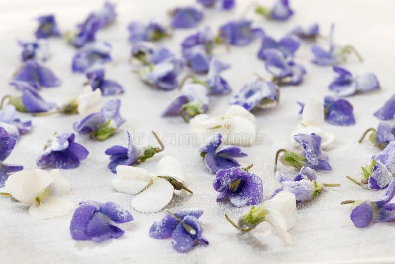 Violetas cristalizadas fotografia de stock