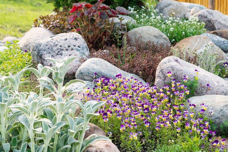 Violetas de florescência e outras flores em um jardim ornamental pequeno no jardim do verão imagens de stock