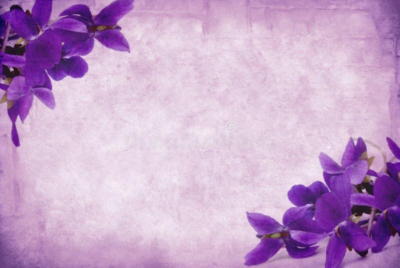 Violetas de Grunge fotos de stock