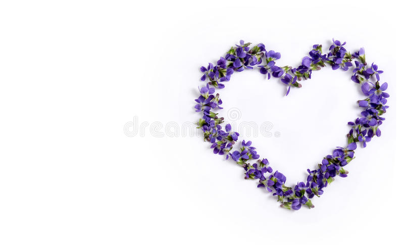 Violetas delicadas de la primavera en la forma de un corazón en un cierre blanco del fondo para arriba foto de archivo