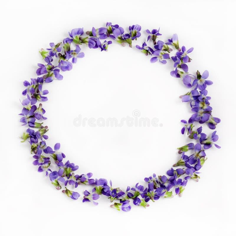 Violetas delicadas de la primavera en un cierre blanco del fondo para arriba imagen de archivo libre de regalías