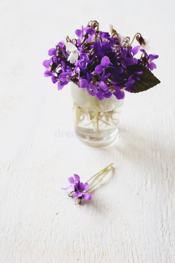 Violetas frescas hermosas en la tabla blanca imágenes de archivo libres de regalías