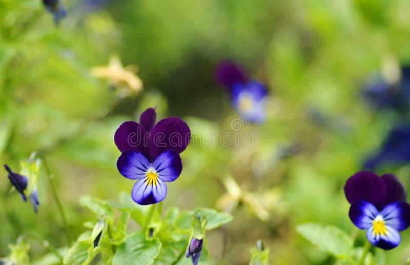 Violetas verdes borrosas suavidad de la frontera del fondo imagen de archivo libre de regalías