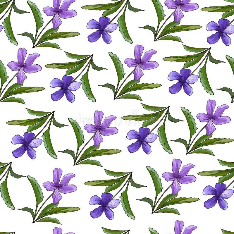 Violeten blommar på en ljus bakgrund Vår/blom- bakgrund för sommar Sömlös textur med violets Hand-dragit För tapet vektor illustrationer