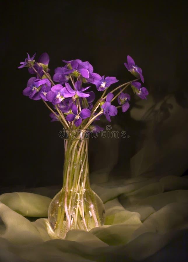 Violets still life royalty free stock image