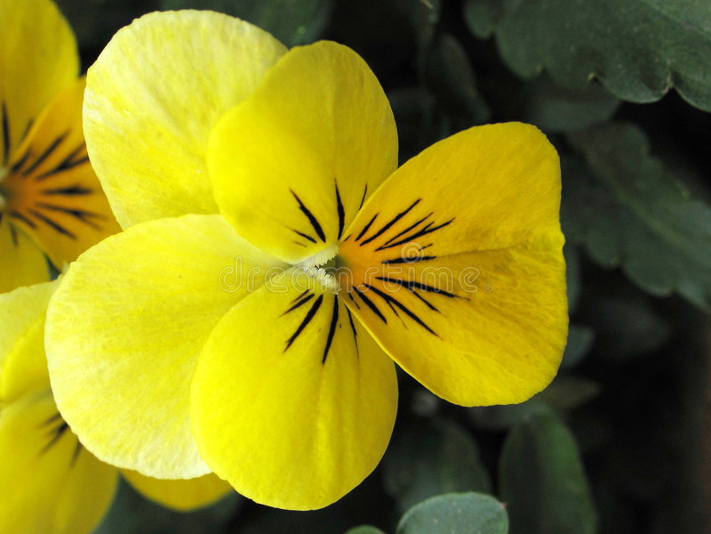 Download Violett fotografering för bildbyråer. Bild av green, blomma - 48865