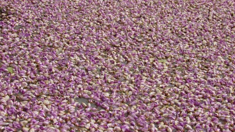 violett färgblomma på naturlig trevlig härlig bakgrund för vatten arkivbilder