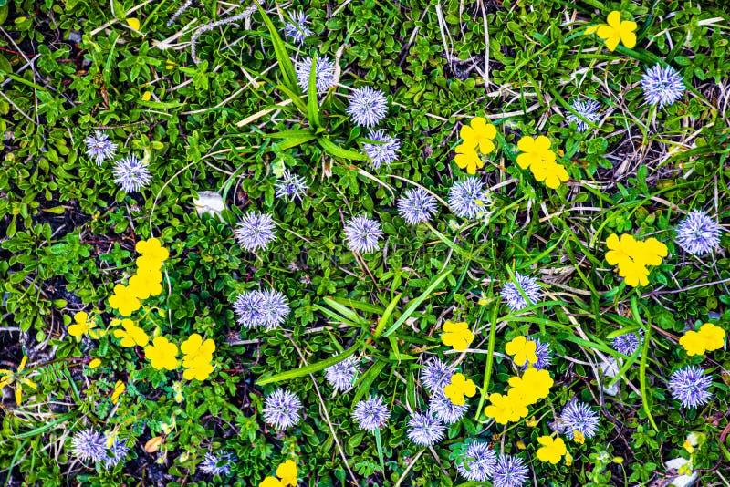 Violett gul gräsplan arkivbild
