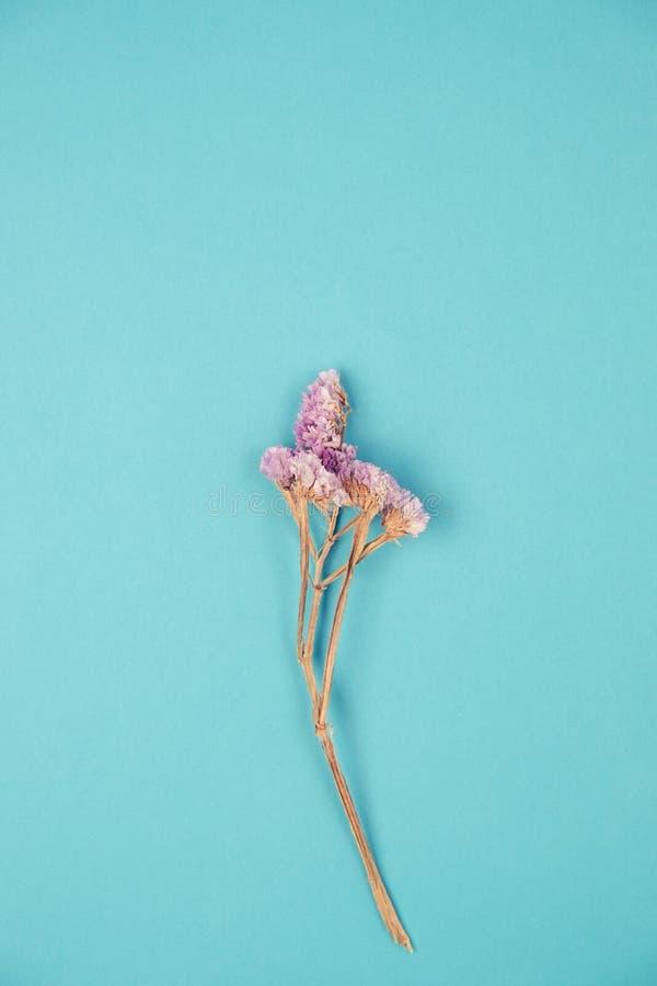 Violett-Statikblüte auf blauem Hintergrund im Vintage-Ton stockfoto