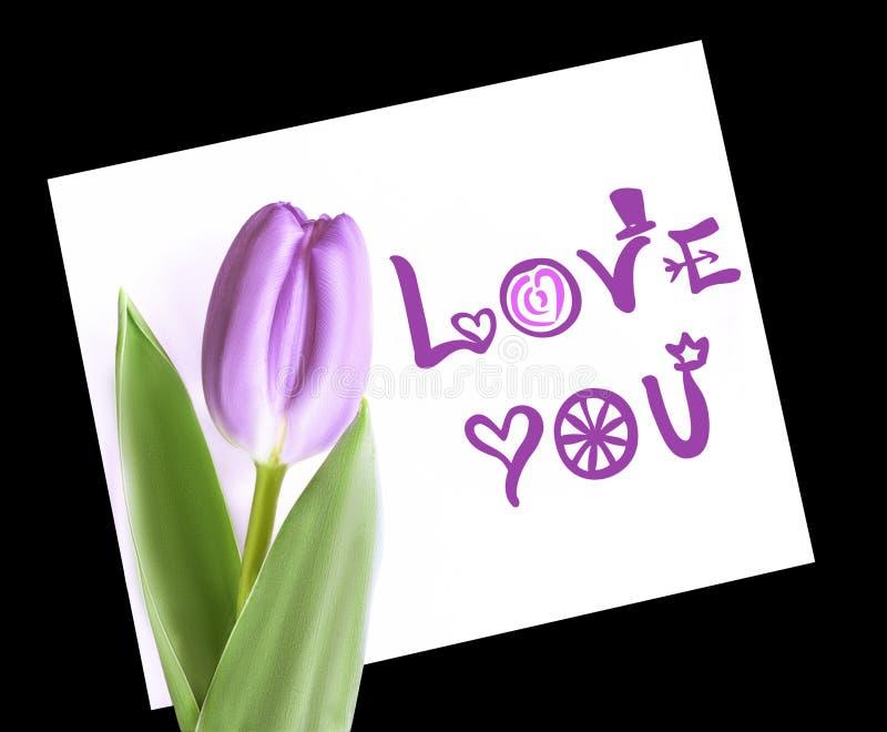 Violett tulpan på vitbokanmärkningsförälskelse dig Isolerat på svart bakgrund royaltyfri foto