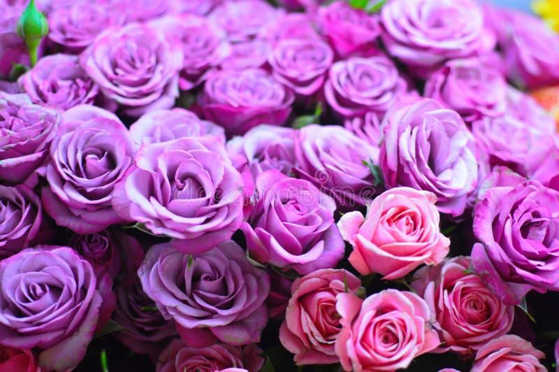 Violetta blommarosor för härlig bukett arkivbilder