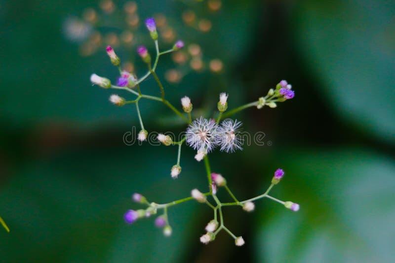 Violetta och vita blommor i den samma filialen royaltyfria bilder