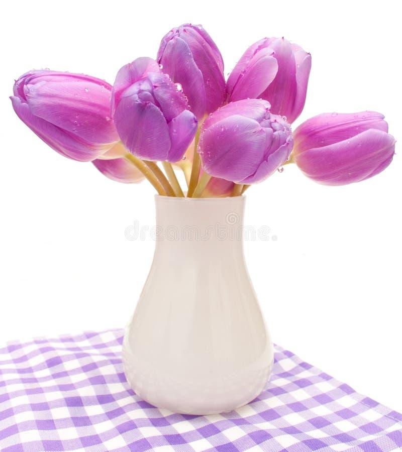 violetta tulpan fotografering för bildbyråer