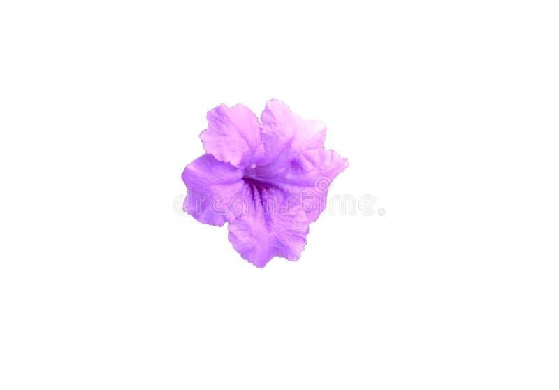 Violette bloem royalty-vrije stock foto