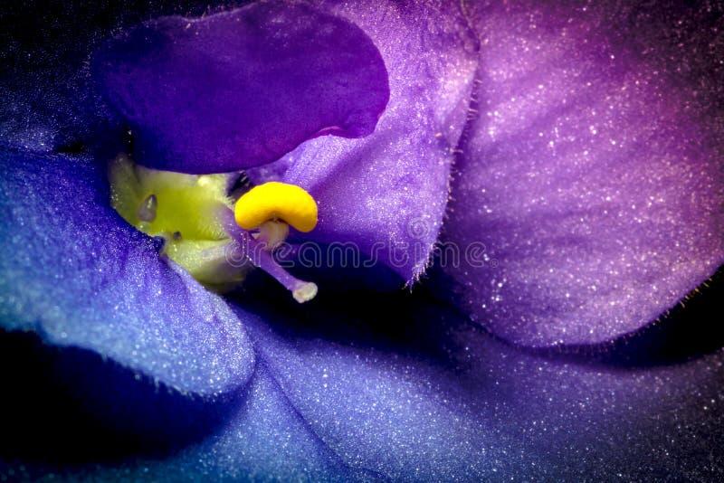 Violette bloem macroclose-up met mooie zachte gradiënt r r royalty-vrije stock afbeeldingen