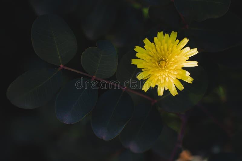 Violette bloem op donkere dichte omhooggaand als achtergrond royalty-vrije stock afbeeldingen