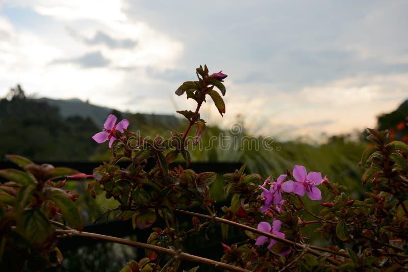 Violette bloem in paradijs stock foto's