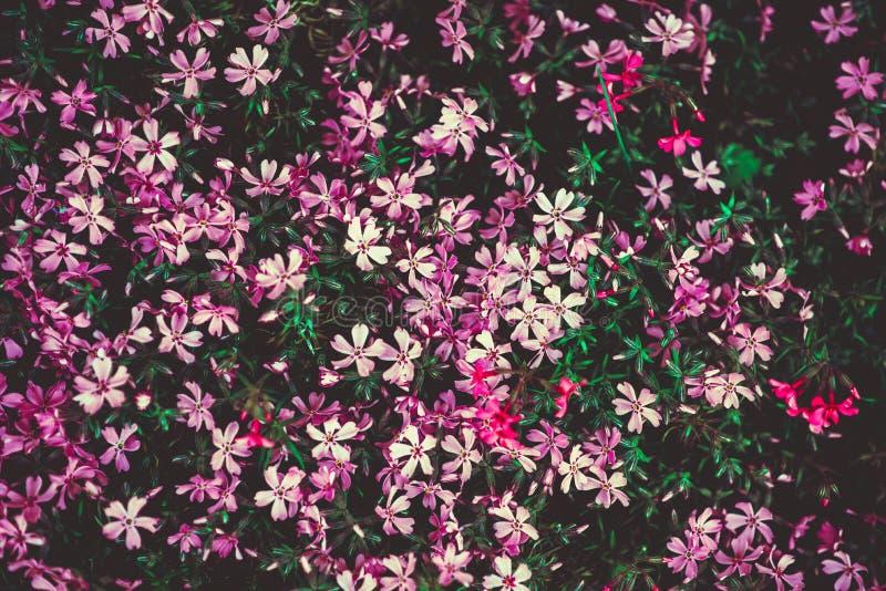 Violette bloemen royalty-vrije stock foto's