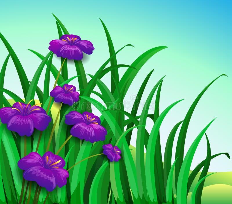 Violette bloemen in de tuin vector illustratie