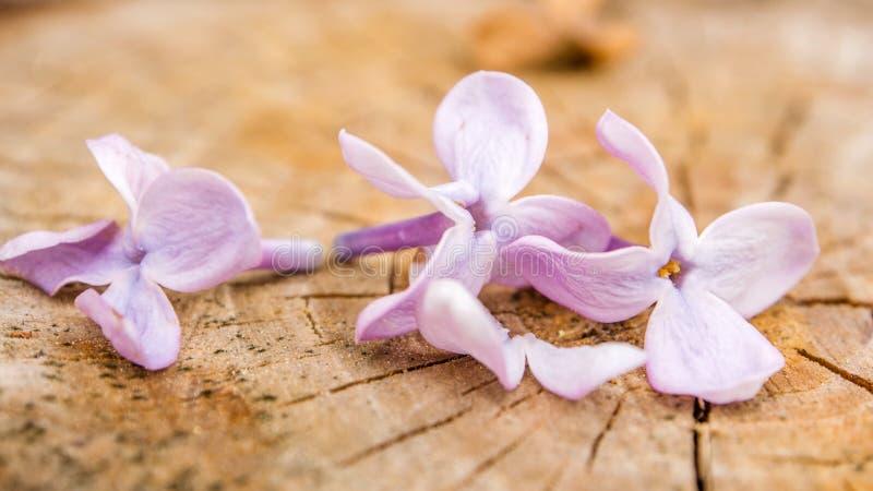 Violette bloemen op houten achtergrond stock fotografie