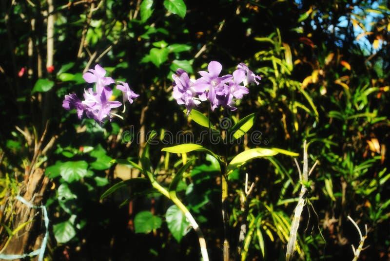 Violette Blumen stockfoto