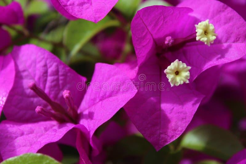 Violette Blumen lizenzfreies stockfoto