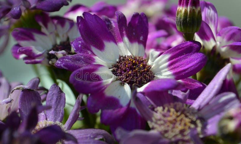 Violette Blumen stockbilder