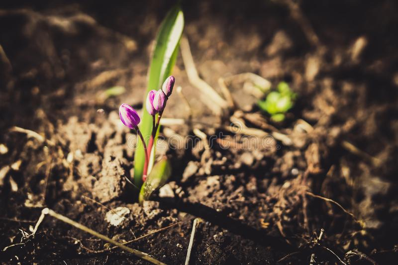 violette Blumen auf Erde lizenzfreie stockfotografie