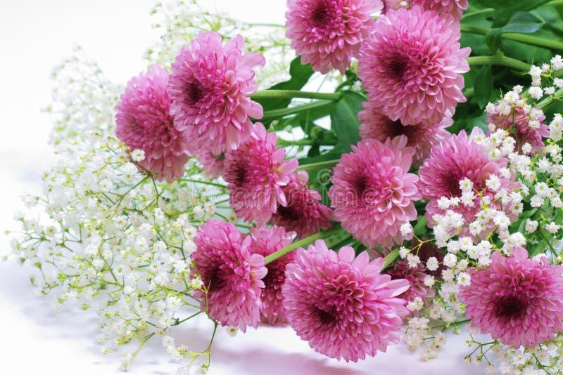 Violette chrysant royalty-vrije stock foto's