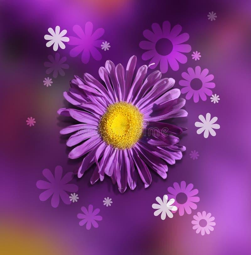 Violette chrysant stock afbeelding