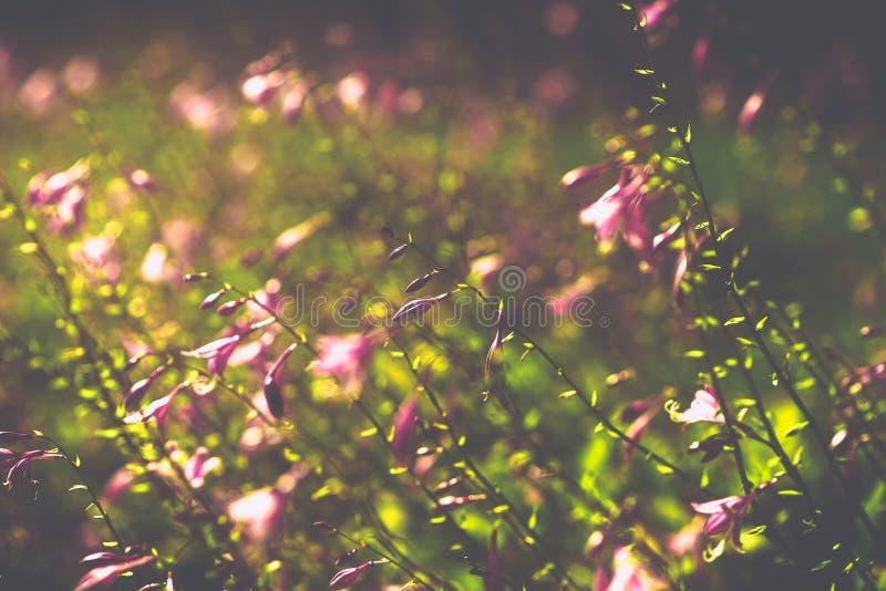 Violette dichte omhooggaande bloemen vage achtergrond royalty-vrije stock afbeeldingen