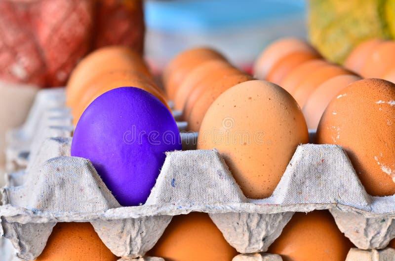 Violette eieren één in dozen. royalty-vrije stock foto's